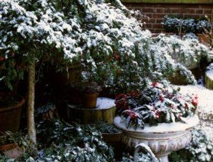 2015-10-uredjenje_baste_pre_zime_kako_da_zastitite_biljke_od_hladnoce_i_vlage_tokom_zimskih_meseci_1_376479214